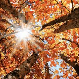 Boite d'automne